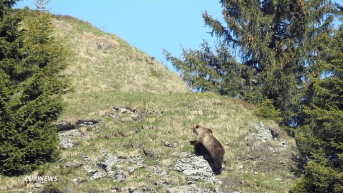 Der Bär auf dem Uetliberg: Das war unser 1. April-Scherz