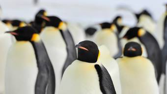 Wie sich Tiere gegen die Kälte schützen
