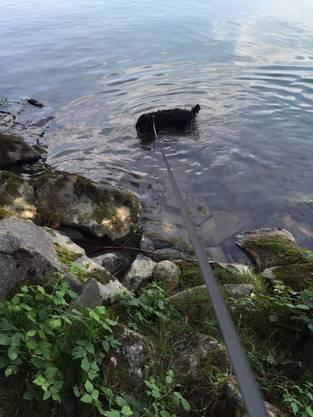 Skyna im Rhein