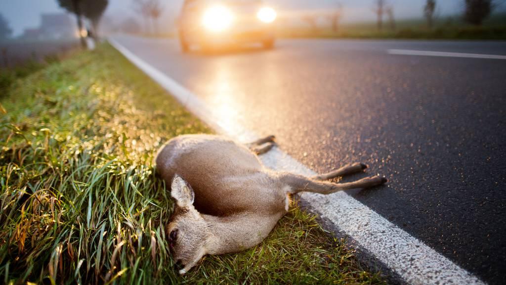 Mehr Wildtier-Unfälle wegen der Zeitumstellung