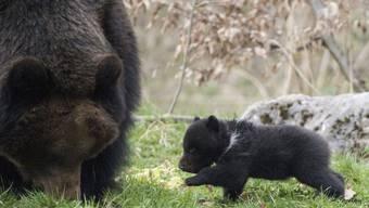 Bärenmutter Masha und eines der Bärenjungen.jpg
