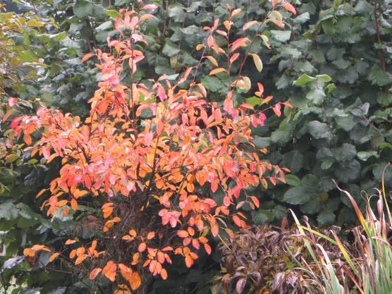 Wieder andere Farben, die uns zeigen, dass man auch den Herbst mögen kann.