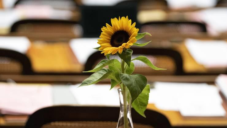 Eine Sonnenblume im Nationalratssaal – ob die zeitsensible Blume in der Nacht transportiert wurde?