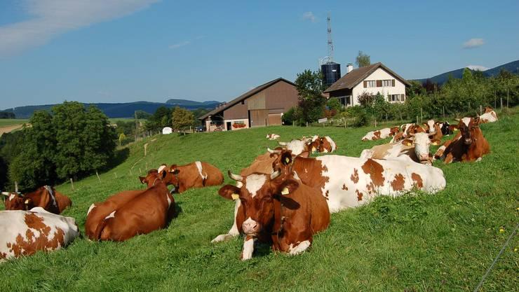 Wer eine Auszeit auf dem Gehrenhof in Brislach nimmt, kann sein tierisches Wunder erleben.