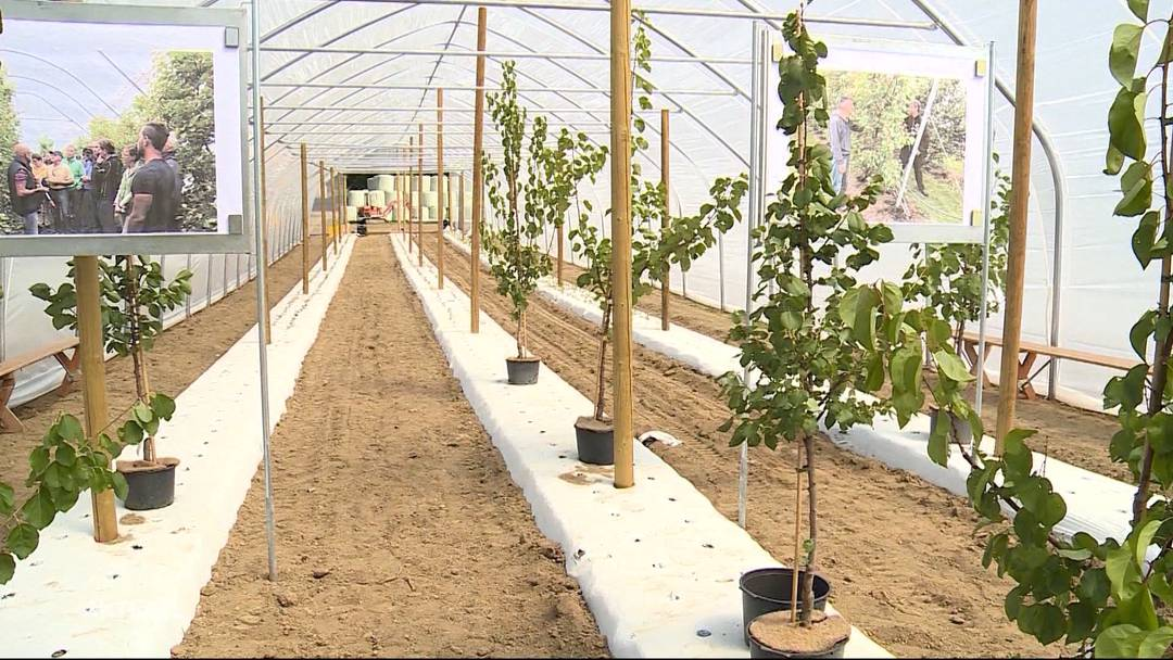 Aprikosenknatsch: Heftiger Shitstorm gegen Pro Natura