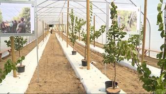 Wegen einer Beschwerde von Pro Natura müssen zwei Bauern in Egliswil ihre Aprikosen-Folientunnel nach der ersten Ernte wieder abbauen. Das hat Folgen: Pro Natura Aargau erlebt nun einen regelrechten Shitstorm und erntet harte Kritik – sogar von Alt-Regierungsrat Rainer Huber.