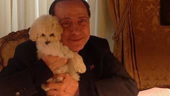 Tierische Liebe: Silvio Berlusconi mit seinem neuen Pudel. Instagram