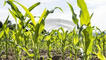 Der Streit um die Zulassung des Unkrautvernichters Glyphosat in der EU geht weiter: Der Vorschlag, das Herbizid für weitere fünf Jahre zu erlauben, hat der zuständige Fachausschuss der EU-Staaten am Donnerstag in Brüssel abgelehnt. (Archiv)