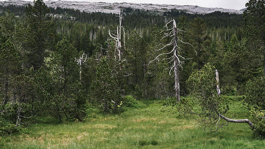 Insgesamt 16'000 Hektaren Biotope und Moore will der Bundesrat zusätzlich unter Schutz stellen. Im Bild die Moorlandschaft unterhalb der Schrattenfluh im Kanton Luzern. (Archivbild).