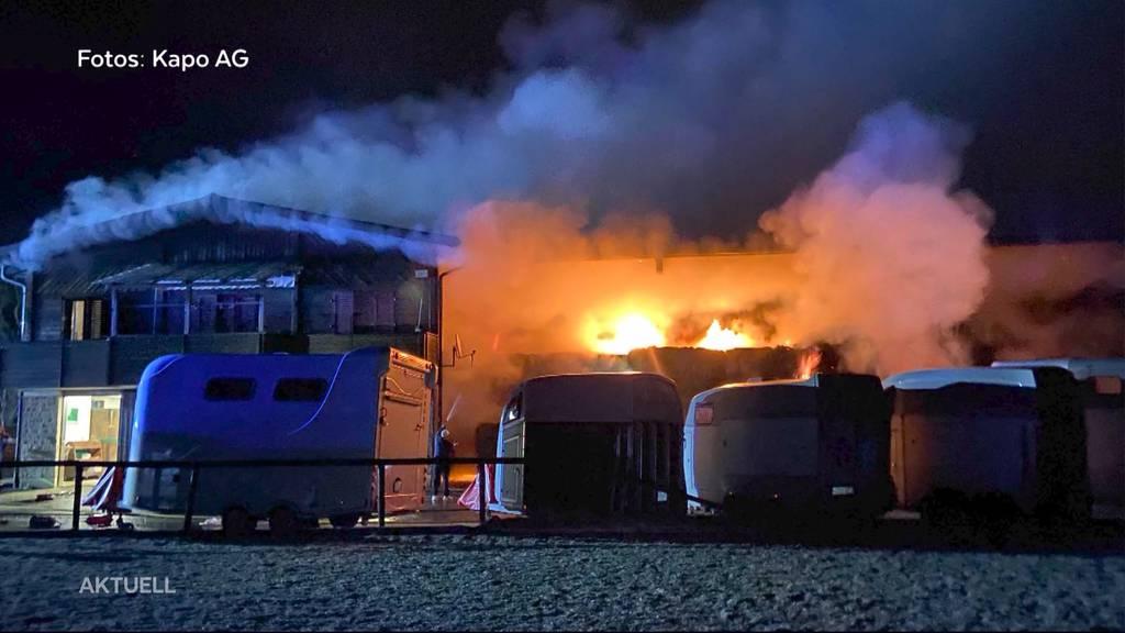 32 Pferde in Würenlos vor Grossbrand gerettet