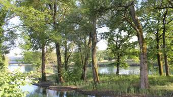Das Limmatufer und der Binzerliweiher erstrahlen in neuem altem Gewand