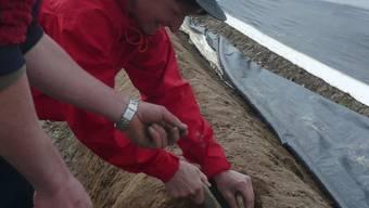 Kursteilnehmerin Cecile Probst aus Büttikon sticht ihren ersten weissen Spargel.
