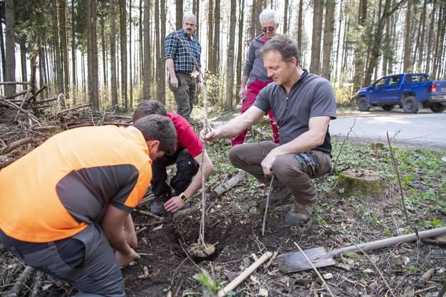 Sie pflanzten im Rahmen ihres Workshops eine Eiche in Birmensdorf.