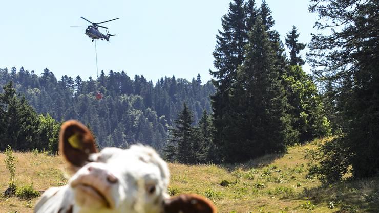 Den Kühen gefällts, den Franzosen weniger: Ein Super Puma bringt Wasser.