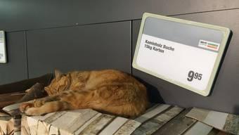 Die Katzen im Migros Langendorf