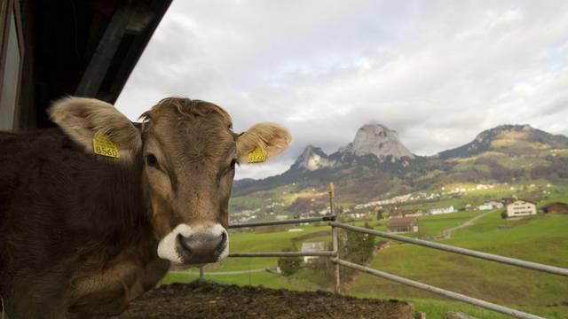Medikamente für Nutztiere kosten im Schnitt 70 Prozent mehr als im Ausland (Symbolbild)