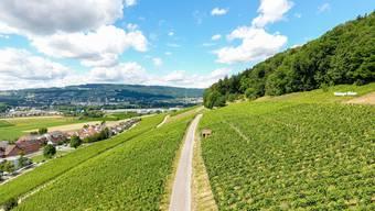 Qualität der Weine von den Weininger Rebbergen könnte das momentane Wetter guttun.