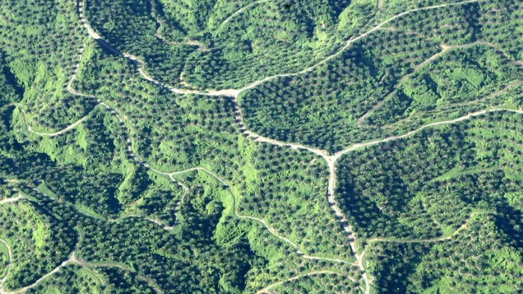 Studie zeigt Zusammenhang von Abholzung und Infektionskrankheiten
