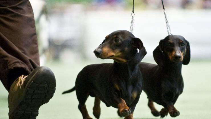 Am 1. August sollten Hundehalter ihre Vierbeiner vor dem Feuerwerk ausführen. Dies empfehlen Tierschützer. (Symbolbild)