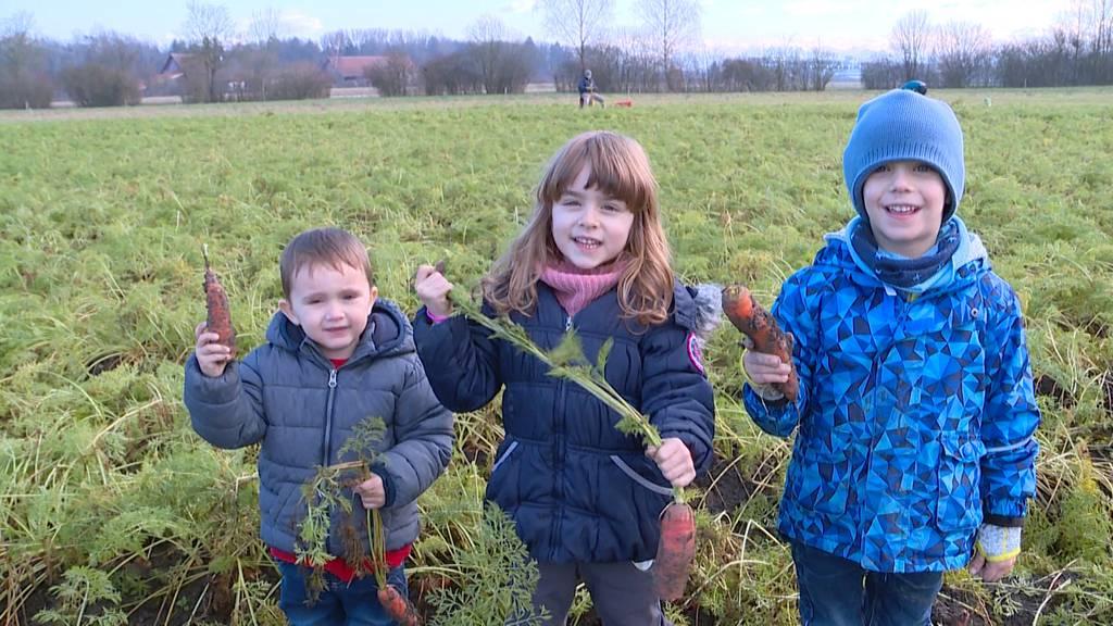 30 Tonnen gratis Bio-Karotten