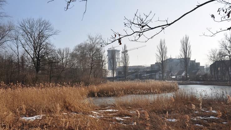 Das Flachmoor am Rande des Dietiker Gebiets SLS soll nun offiziell geschützt werden