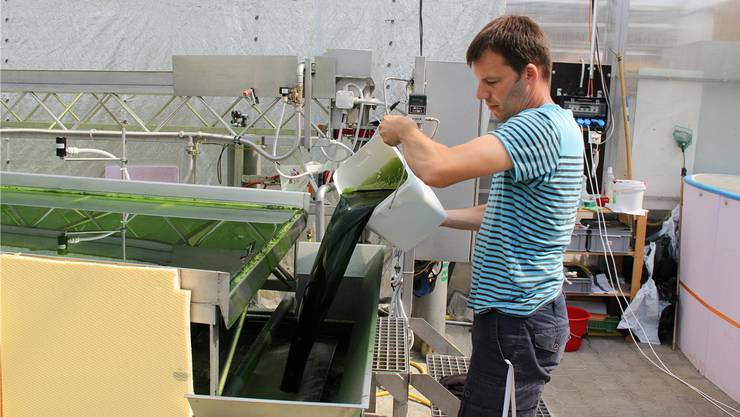Nährstoffe für die Super-Pflanze: Dominik Refardt am Algenbioreaktor.