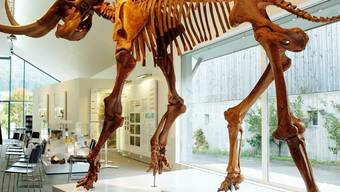 Kopie eines Mammutskeletts (Symbolbild)