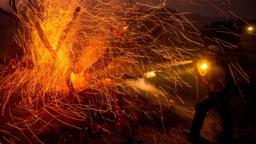 Der Wind weht die Glut von den Bäumen, während ein Feuerwehrmann gegen das Bobcat-Feuer kämpft.