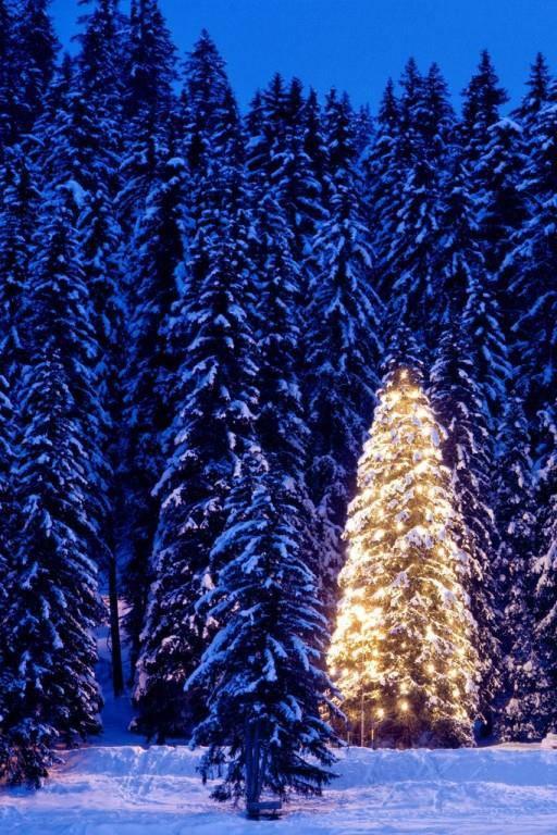 Auch dieses Prachtexemplar von einem Weihnachtsbaum steht in Arosa