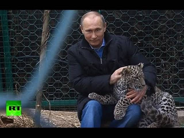 Leoparden sind eher sein Ding: Putin und die Raubkatzen im Sochi National Park, Februar 2014