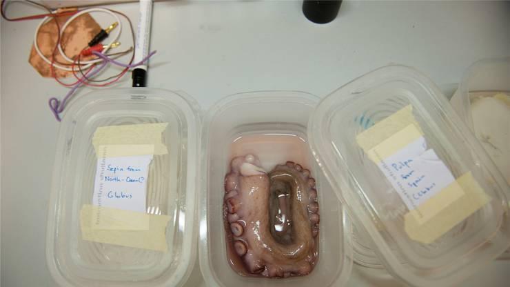 Der vergammelte Fisch will einfach keine Leuchtbakterien bilden. Wurde er zu gut gewaschen?