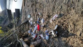 Umweltsünder entsorgen ihren Müll häufig am Ufer des Rheins. Dabei gelangt immer mehr Plastik auch in den Fluss. zvg