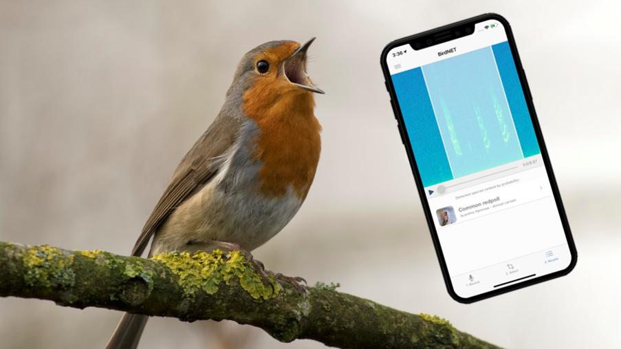Diese App erkennt Vogelgezwitscher