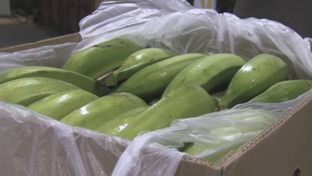 Statt Bananen fanden spanische Ermittler Kokain in Schiffscontainern gefunden (Symbolbild).
