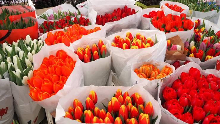Einmal im Jahr verkauft der Frauen-Service-Club Soroptimist Brugg Baden Tulpen, um mit dem Erlös andere Frauen zu unterstützen.Symbolbild/Thinkstock