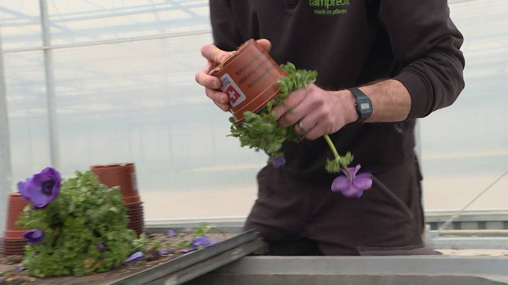 Eine Million für den Kompost: Gärtnerei muss Pflanzen entsorgen