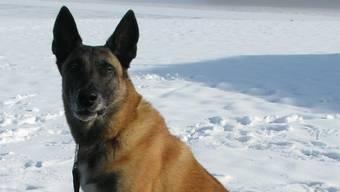 Polizeihund Jasko konnte einen der flüchtigen Verbrecher dingfest machen.