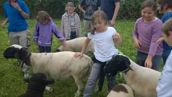 Spannende Erlebnisse dank Ferienpass: Hier arbeiten Kinder mit Tieren auf dem Bernhardsberg.