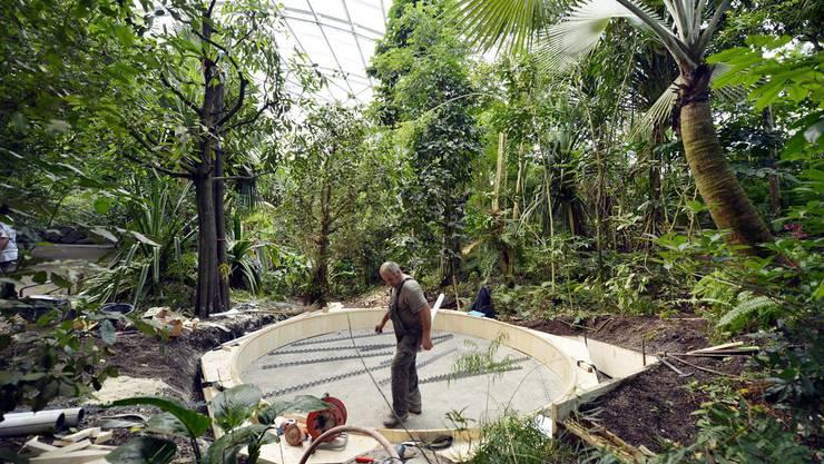 Baustelle Baumkronenweg in der Masoala Halle im Zürcher Zoo .