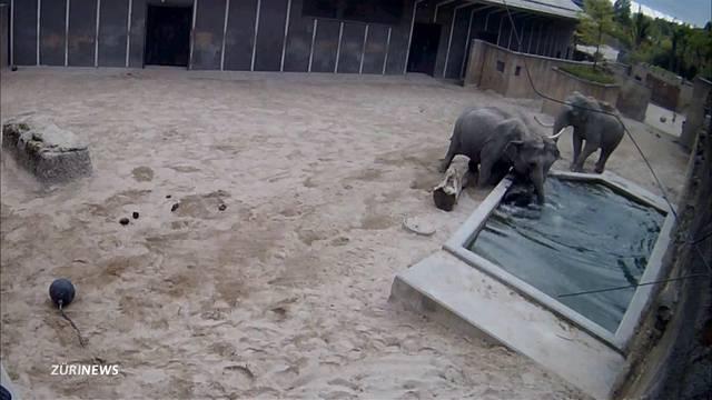 Elefantenbulle wirft Jungtier ins Wasser