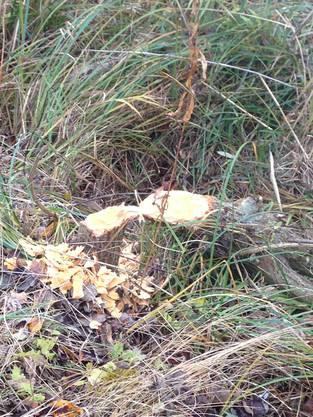 Der Nager leiste mit seinen Dämmen viel für die Biodiversität
