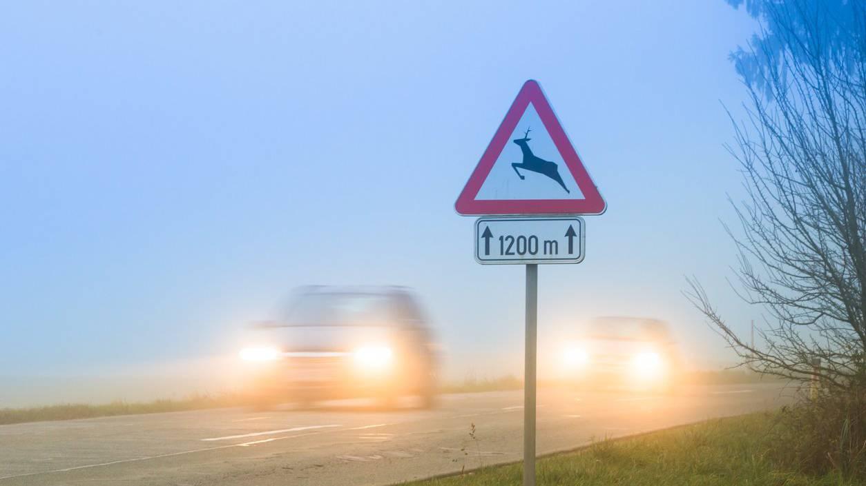 Die Signaltafeln haben gewirkt: Es passieren weniger Unfälle mit Wild.