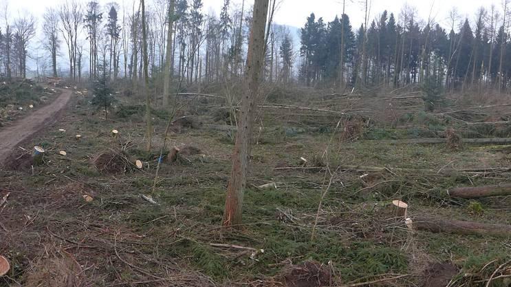 Die Folgen des Sturms im Bürgerwald Aebisholz.