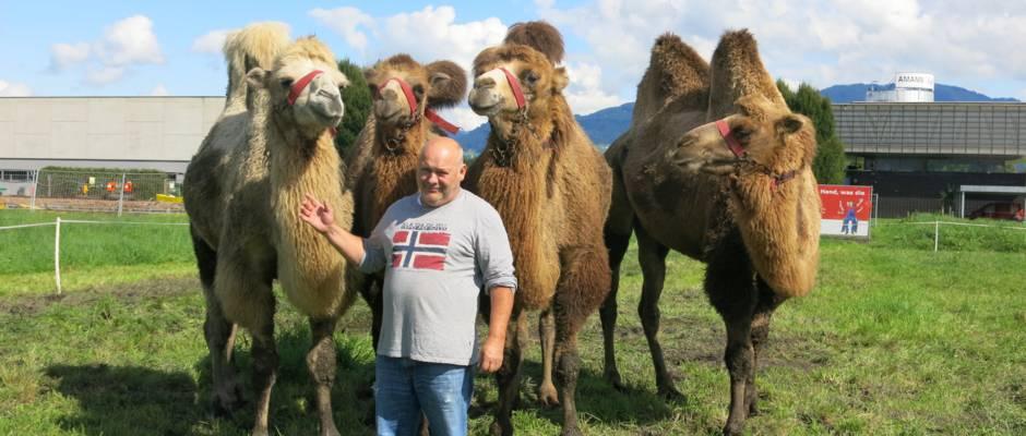 Kamele, Ponys und Pferde des Circus Berlin in Lustenau (© zVg)