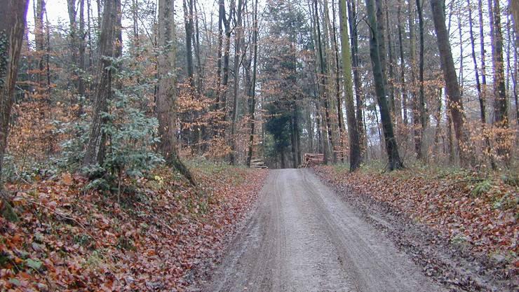 Die FDP Berikon stört sich daran, dass eine Waldstrasse asphaltiert werden soll.