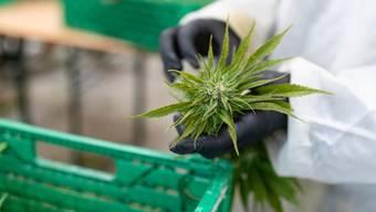 Medizinisches Cannabis gilt als bedeutender Megatrend.