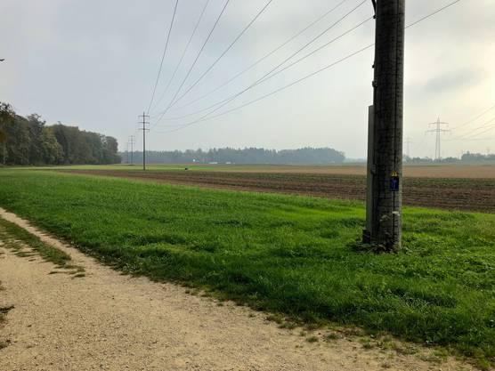 Der Blick vom «Schwulewäldli» in Richtung Autobahn A1.