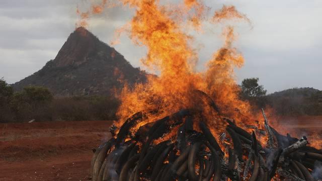 Das Elfenbein brennt lichterloh