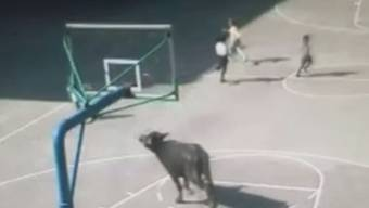 Ein entlaufener Büffel sorgt für Chaos an einer chinesischen Primarschule.
