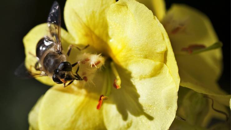 Viel zu wenig Bienen. Nur in der Türkei und Griechenland, wo es viele Imker gibt, hat es noch genügend.